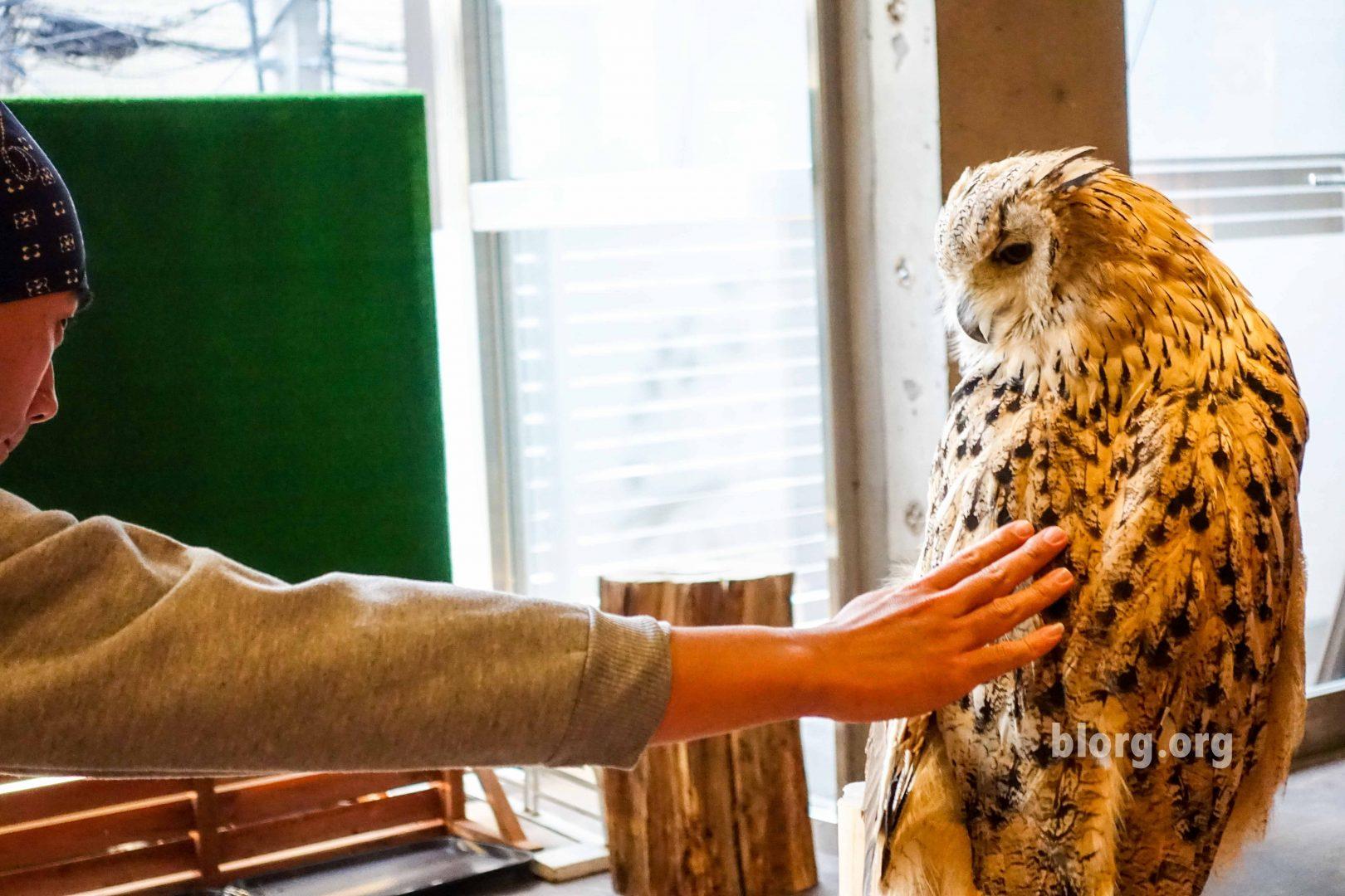 petting owl