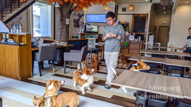 bangkok dog cafe
