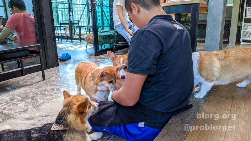 dog cafe bangkok